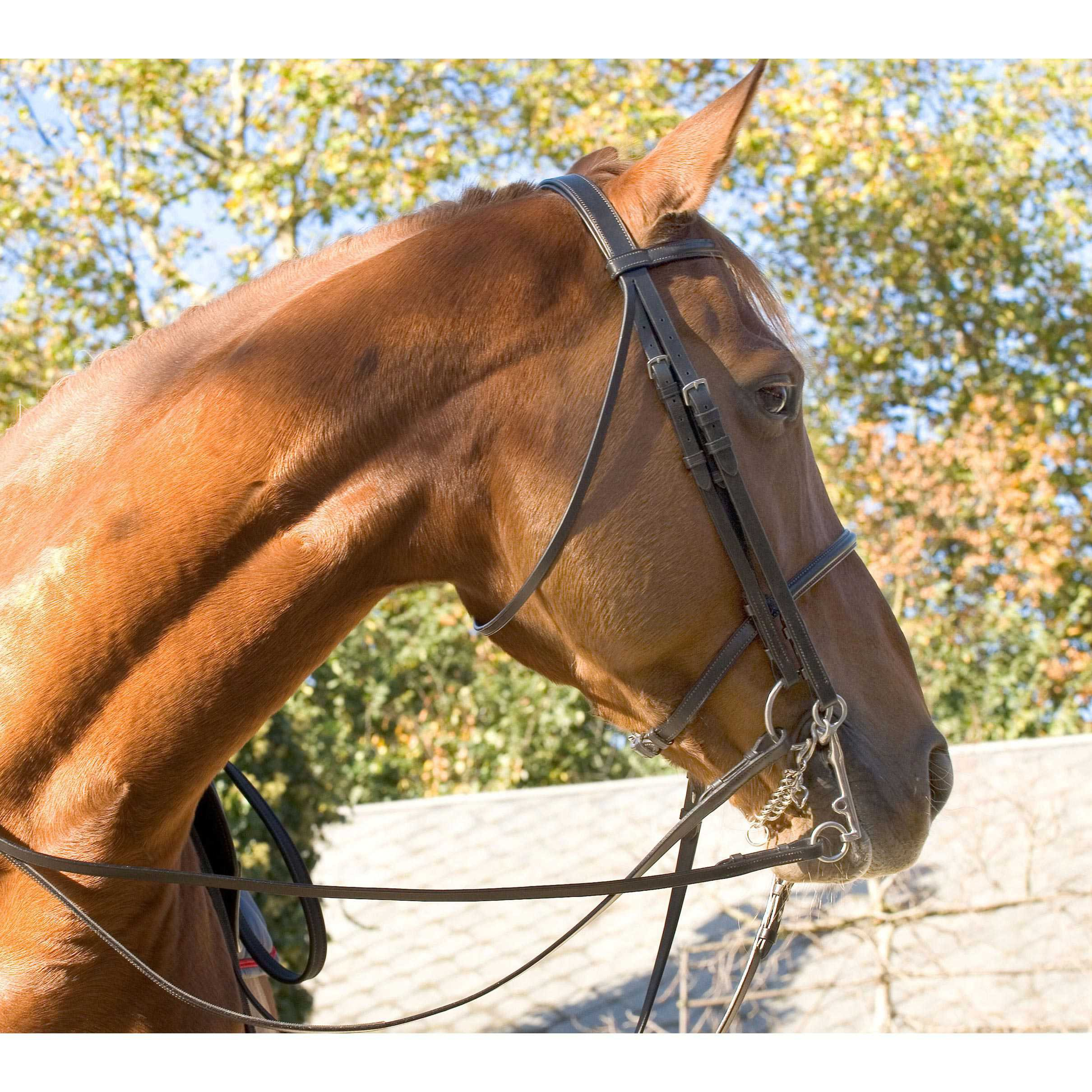 Full-leather Atherstone Double Bridle