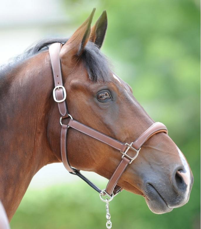 Guibert Paris - Atherstone Head collar full leather