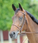 Bridon Atherstone tout cuir gold porté cheval