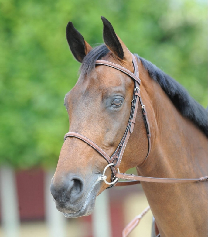 Guibert Paris - Atherstone snaffle bridle all leather