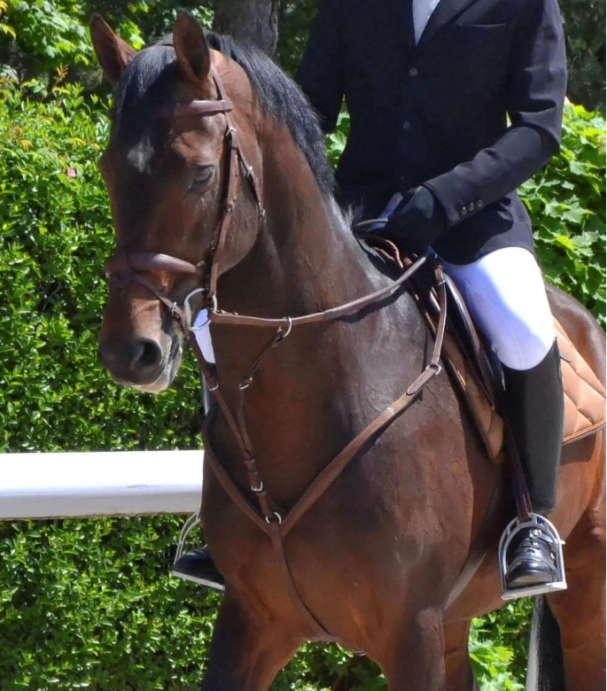 Guibert Paris - Atherstone breastplate with spare running martingale attachment