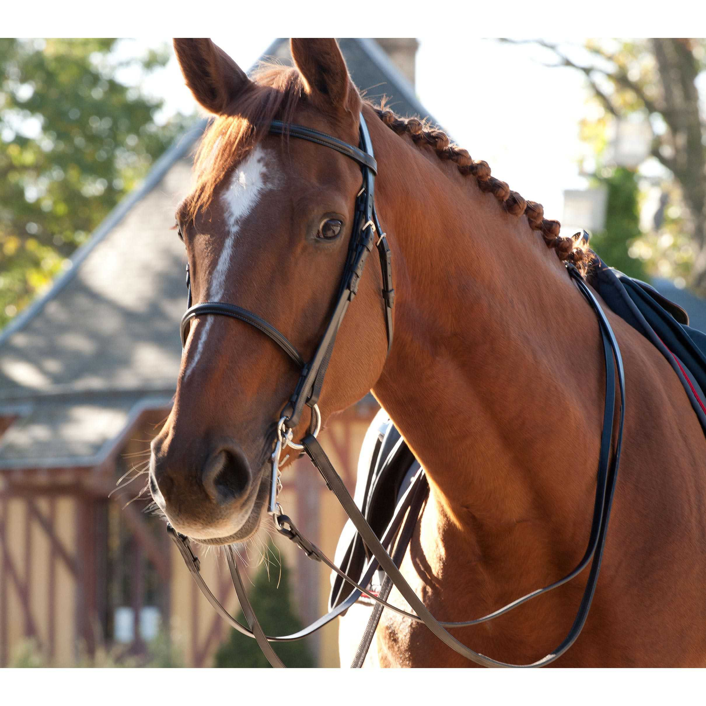 Guibert Paris - All leather bridle