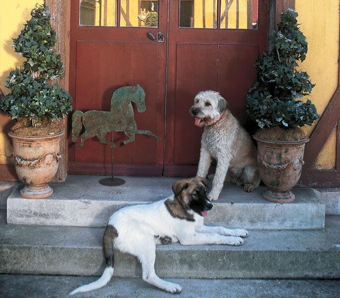 犬用アクセサリー
